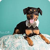 Adopt A Pet :: Sammy - Birmingham, AL