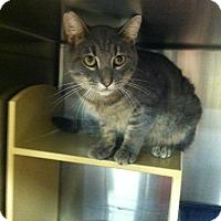 Adopt A Pet :: Louie - Muncie, IN