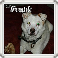 Adopt A Pet :: Trouble - Princeton, WV