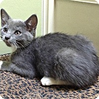 Adopt A Pet :: Samantha H. - Marietta, GA
