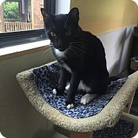 Adopt A Pet :: Andrew - Boca Raton, FL