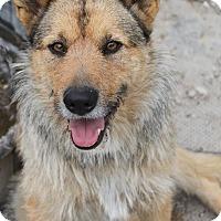Adopt A Pet :: Roxy - Oakland, AR