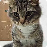 Adopt A Pet :: Karl - Channahon, IL