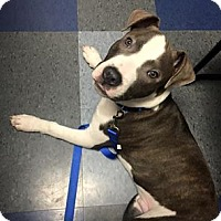 Adopt A Pet :: Mateo - Chicago, IL