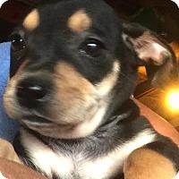Adopt A Pet :: Chuck - Thousand Oaks, CA