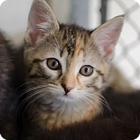 Adopt A Pet :: Coral - Greenwood, SC