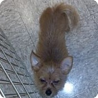 Adopt A Pet :: Tater - Westville, IN