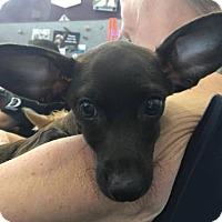 Adopt A Pet :: Madison Kocian - Brooklyn, NY