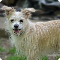 Adopt A Pet :: Buster - Allentown, VA