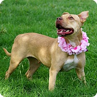 Adopt A Pet :: COOKIE - Phoenix, AZ