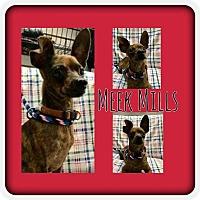 Adopt A Pet :: Meek Mills - Plainfield, IL