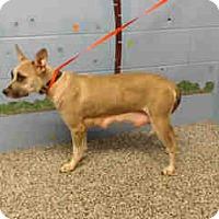 German Shepherd Dog/Shepherd (Unknown Type) Mix Dog for adoption in San Bernardino, California - URGENT ON 10/14 San Bernardino