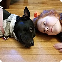 Adopt A Pet :: Darla - Nashville, TN
