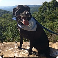 Adopt A Pet :: JoJo - Homewood, AL