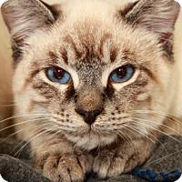 Adopt A Pet :: *PRINCE - Camarillo, CA