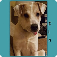 Adopt A Pet :: Fin - Genoa City, WI