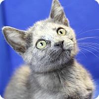 Adopt A Pet :: Clover - Winston-Salem, NC