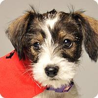 Adopt A Pet :: Tinsel - Crossville, TN