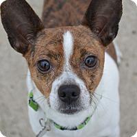 Adopt A Pet :: Herbie - Toledo, OH