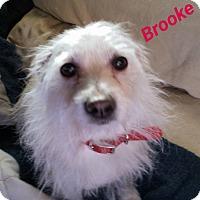 Adopt A Pet :: Brooke-Perfect companion! - Victorville, CA