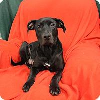 Adopt A Pet :: Sugar Plum - Melbourne, KY