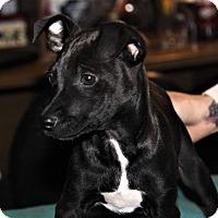 Adopt A Pet :: Doc - Tijeras, NM