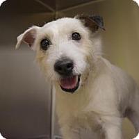 Adopt A Pet :: Casper - Philadelphia, PA
