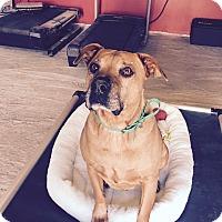 Adopt A Pet :: Oscar aka Mr. Chill - Phoenix, AZ