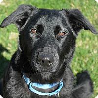 Adopt A Pet :: Giselle - Sunnyvale, CA