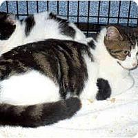 Adopt A Pet :: Pepperoni - Colmar, PA