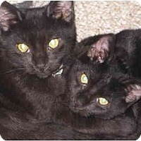 Adopt A Pet :: Hocus n Pocus (KL) - Little Falls, NJ