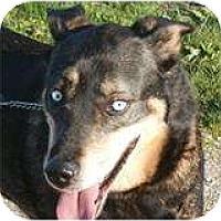 Adopt A Pet :: Natasha - ADOPTED - kennebunkport, ME