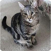 Adopt A Pet :: Beetle - Duncan, BC