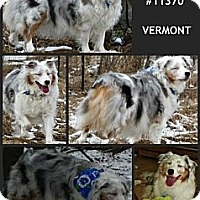 Adopt A Pet :: Winnie-Courtesy Posting - Cheshire, CT