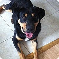 Adopt A Pet :: Roman - Hamilton, ON