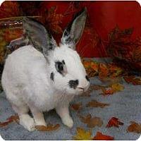Adopt A Pet :: Tulip - Roseville, CA