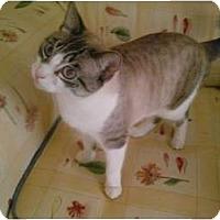 Adopt A Pet :: Regina - Bonita Springs, FL