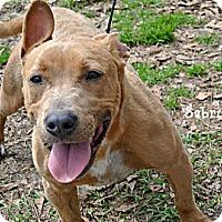 Adopt A Pet :: Sabrina - Vancleave, MS