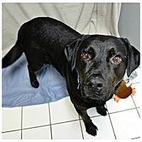 Adopt A Pet :: Oscar - Forked River, NJ