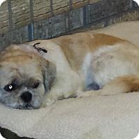 Adopt A Pet :: Frankie - Rigaud, QC