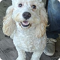 Adopt A Pet :: Baxter - Newbury Park, CA