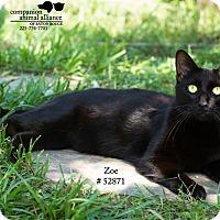 Adopt A Pet :: Zoe - Baton Rouge, LA