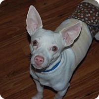 Adopt A Pet :: Albi - Wedgefield, SC