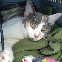 Adopt A Pet :: Jessabelle - Los Angeles, CA