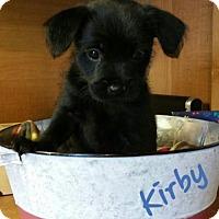 Adopt A Pet :: Kirby - Arcadia, FL