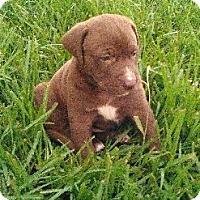 Adopt A Pet :: Cannon - Waller, TX
