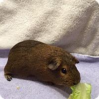 Adopt A Pet :: Dayzie - Princeton, MN