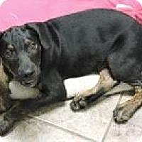 Adopt A Pet :: Rambo - Cottonport, LA