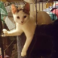 Adopt A Pet :: Farley - Lyons, IL