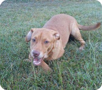 Hound (Unknown Type)/Terrier (Unknown Type, Medium) Mix Dog for adoption in Jefferson, Texas - Darlin